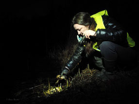 Hilfe für Amphibien - Foto: Andrea Herschel