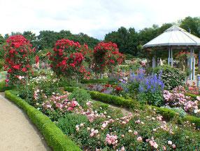 Üppig blühende Rosen in mit Buchbaum umgrenzten Beeten mit kleinem Pavillon
