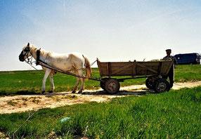 ein einfacher Bauer mit einem edlen Ross