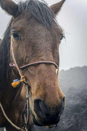 Pferd traurig müde