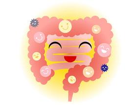 乳酸菌とビフィズス菌の免疫力効果