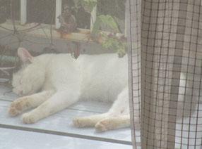 美猫、とはいえませんが、可愛い寝顔
