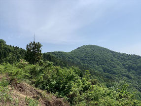 ▲途中の蕨野分岐から望む山頂