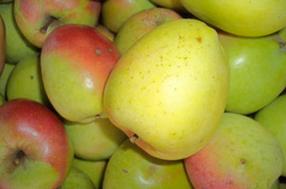 Grüner Bellafleur Apfel