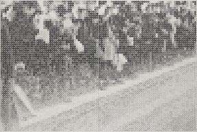 8.11-9.10「第7回トリエンナーレ豊橋 星野眞吾賞展」審査員推奨(豊橋市美術博物館/愛知)