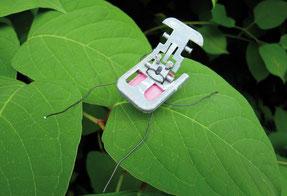 Insecta Urbanica