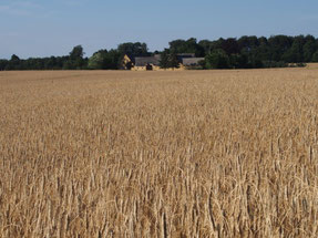 (上)一面の小麦畑、(下)6000年前の墓の入り口