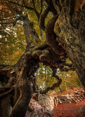 Fotoworkshop Harz, Ruine der Lauenburg bei Stecklenberg,  Kaps