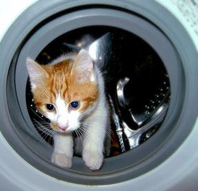 Katze in Waschmaschine