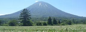 京極町から見た羊蹄山