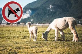Foto: Dorf der Tiere, Bearbeitung: IW