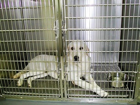 東京ラブリー動物病院のペットホテルを利用していただいている犬の画像です