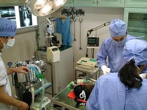 犬の胸壁にできた腫瘍の摘出手術をしているところです。