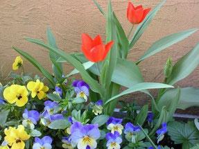 建物の周りにはお花がいっぱい。春はチューリップとビオラが可愛い花を咲かせます。