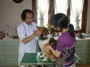 犬の口腔内を診察している画像です