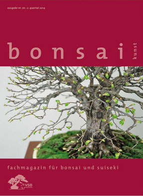 "Bonsai OLMO, ULMUS  MINOR (Olmo Campestre) stile scopa rovesciata (Hokidachi) ""Bonsai Knust"" 2014"