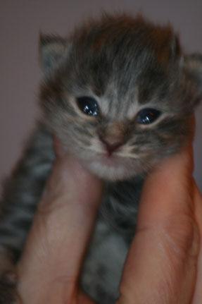 Prinzessin Leia Organa, 8 Tage alt und schon so propper