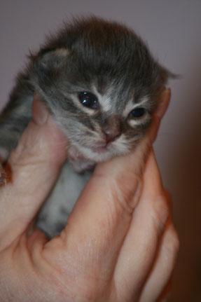 Rey 8 Tage alt, ab jetzt geht sie mit offenen Augen durch die Welt