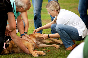 Certificate Program in Canine Physical Rehabilitation Instructors