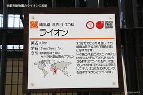 ライオンの説明(京都市動物園)