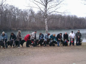 Lernspaziergang Plausch Plauschgäng, Freude mit vielen Hunden