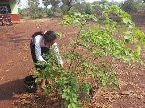 植えた苗木が枯れないように、友だちと交代で水やりをしています