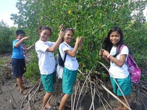 植林活動のため、大きく育ったマングローブの芽を探す子どもたち