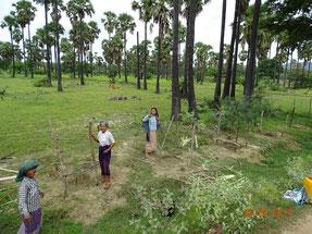学校の敷地内だけでなく、村の道路脇にも植林。家畜も通るため、村人たちがトゲのある木を使って1 本1本柵を作ってくれた