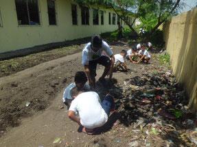 校舎の周りにマホガニーを植えました
