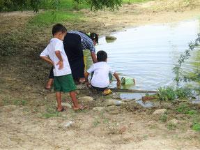 苗木の水やりにも、近くの池の水を使っています。