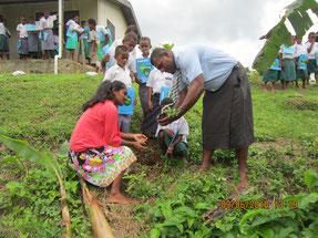 生徒も先生も一緒に協力して苗木を植えました
