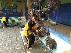 ペットボトルを使ったお手製の プランター。教室前に吊り下げて、 植物を大切に育てています