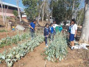 有機農業で育てた野菜を大切に管理 。たい肥づくりも学びました