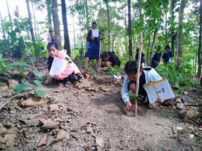 2018 年には、パユングなど の郷土樹種を中心に200本の苗 木を植樹。植林後も、自分の担当 している木の成長を確認しながら 管理を続けている