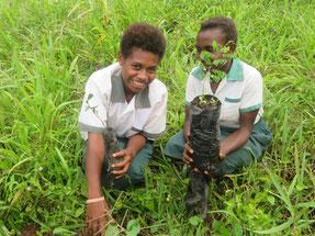 ターミナリアなどの堅木やサワーソップやスターフルーツなどの果樹を植えた