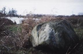 200.000 Jahre im Boden verborgen: Dieser Granitfindling aus Skandinavien trat beim Ausschieben der neuen Teiche zutage. Foto: Albrecht