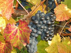 Weinbau Toifl