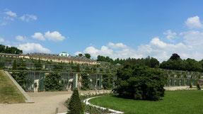 Schloss Sanssouci, Weinberg
