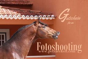 gutschein für pferdeshooting gutscheine verschenken tiere pferde tiershooting fotoshooting verschenken