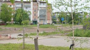 Тематическая иллюстрация. Почти 200 заявок на посадку деревьев подали жители Иркутска в 2014 году. Автор фото: Баграновская Наталья