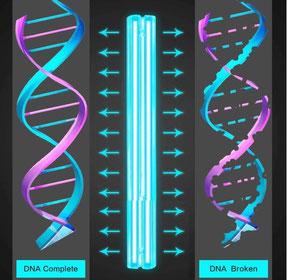 Desinfektion KNORR UV-Licht ohne Chemie umweltschonend