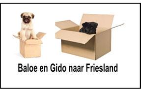 Baloe en Gido verhuizen