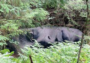 Kunstwerk im Ewe Experience Garten: Schwarz-weißes Gesicht auf der Seite liegend zwischen Farnen und Bäumen