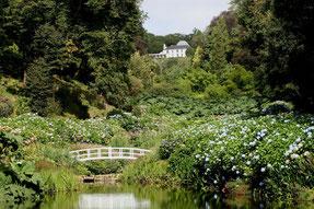 Trebah Garden mit Teich, Brücke und Hortensienbüschen