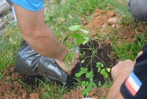 green wave オイスカ 子供の森 計画 緑の地球を世界の子供たちとともに