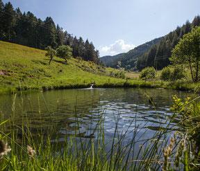Das Steinenbachtal