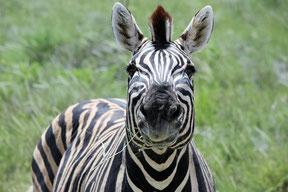 Ngorongoro Safari Reiseanbieter