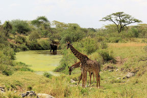 Combine Kilimanjaro with Safari in the Serengeti
