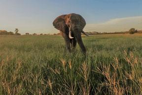 Tansania Safarireisen