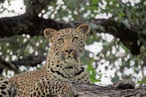 Serengeti Safari Reiseunternehmen